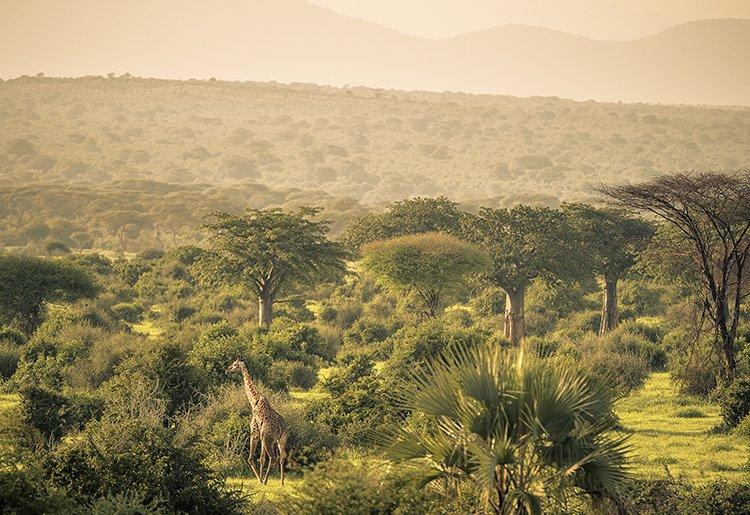 A taste of Tanzania